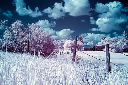 How could we define infrared photography?  I guess we have to explain what regular photography is to define what's beyond it.   Read the full post http://whosaidphotography.com/tutorial/what-you-need-to-know-about-infrared-photography/  #britishcolumbia #vancouverIsland #travelphotographer #photography  #exploreBC #canada #BC #beautifulBC #photooftheday #500px