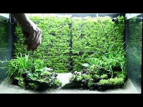 how to make moss grow on rocks in aquarium