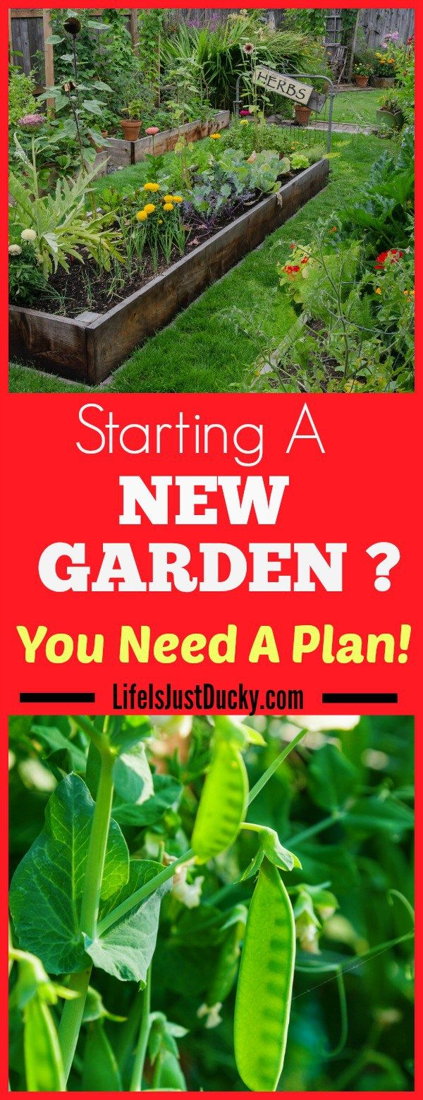 Are you starting a new garden? Or maybe expanding an existing one? You need a plan! Here are some things to consider to make your gardening experience the best it can be.