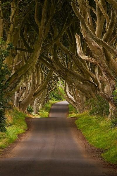 The Dark Hedges, Ireland ...