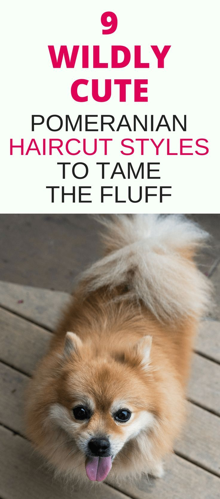 pomeranian haircut style 800 best puppies cute animals images on pinterest 8463