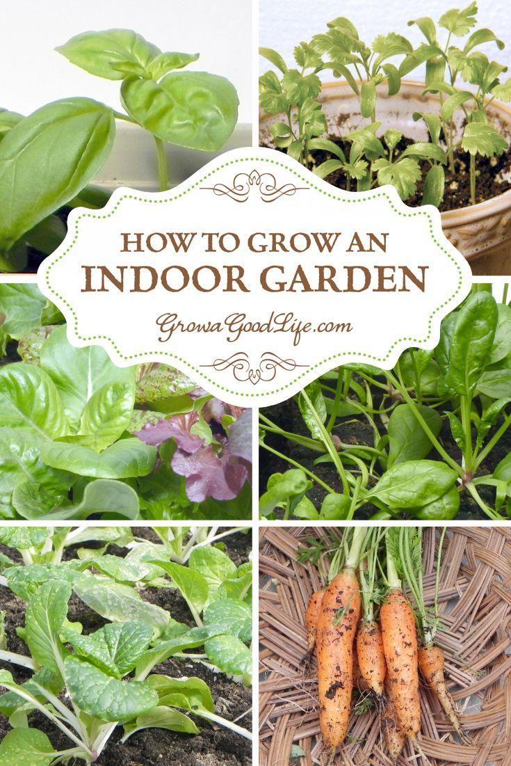 How to Grow an Indoor Garden  Indoor PlantsIndoor GardeningContainer  GardeningVegetable. Best 25  Growing vegetables indoors ideas on Pinterest   Growing