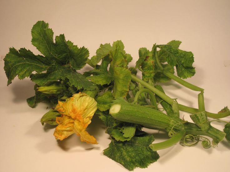 Talli di zucchine o taddhi in umidoI talli sono i germogli,le foglie più tenere della pianta delle zucchine che spesso hanno zucchine piccolissime att