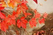 Αποτέλεσμα εικόνας για εικόνες φθινοπώρου