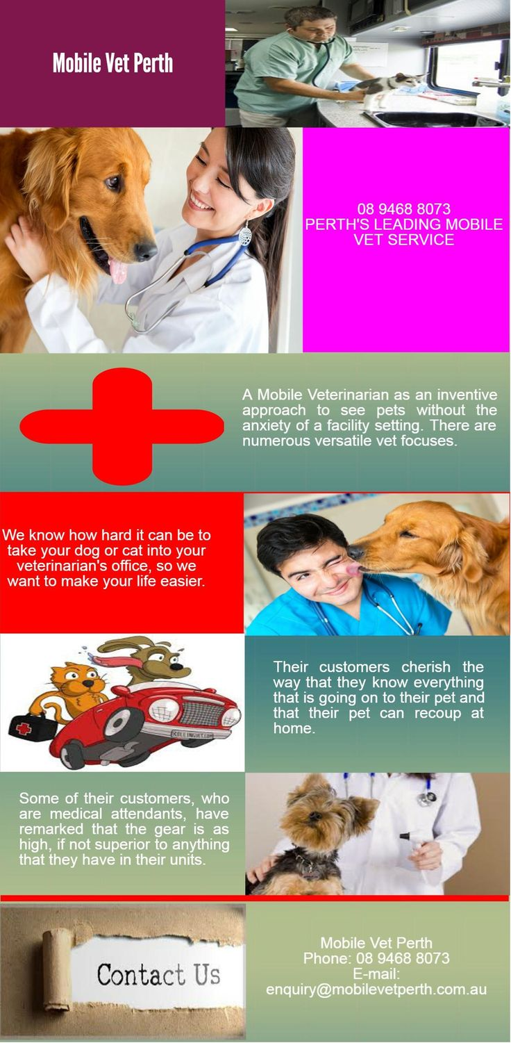 We Best Mobile Vet in Perth offer surgeries and dentals in their customers' homes. To know more contact at 239 Pier Street, PERTH WA 6000 . Call us at 894688073.