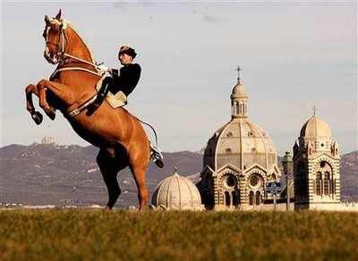 1000 images about cadre nor de saumur on and rider horses and tack rooms