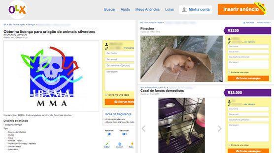 Após abaixo-assinado na web, OLX promete mais rigor com a venda de animais