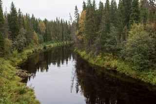 L'industria della carta rischia di far sparire la grande foresta del nord La Grande Foresta del Nord è il secondo più grande ecosistema terrestre al mondo – dopo le foreste tropicali – e si estende per 16 milioni di chilometri quadrati, passando dall'Alaska al Canada, dall