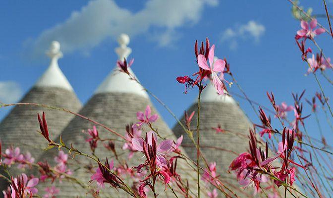 rustic, romantic - Vacation Rental - Trulli Gardens, Puglia, Italy