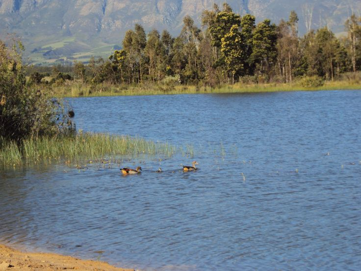 one of our dams at Saronsberg in Tulbagh