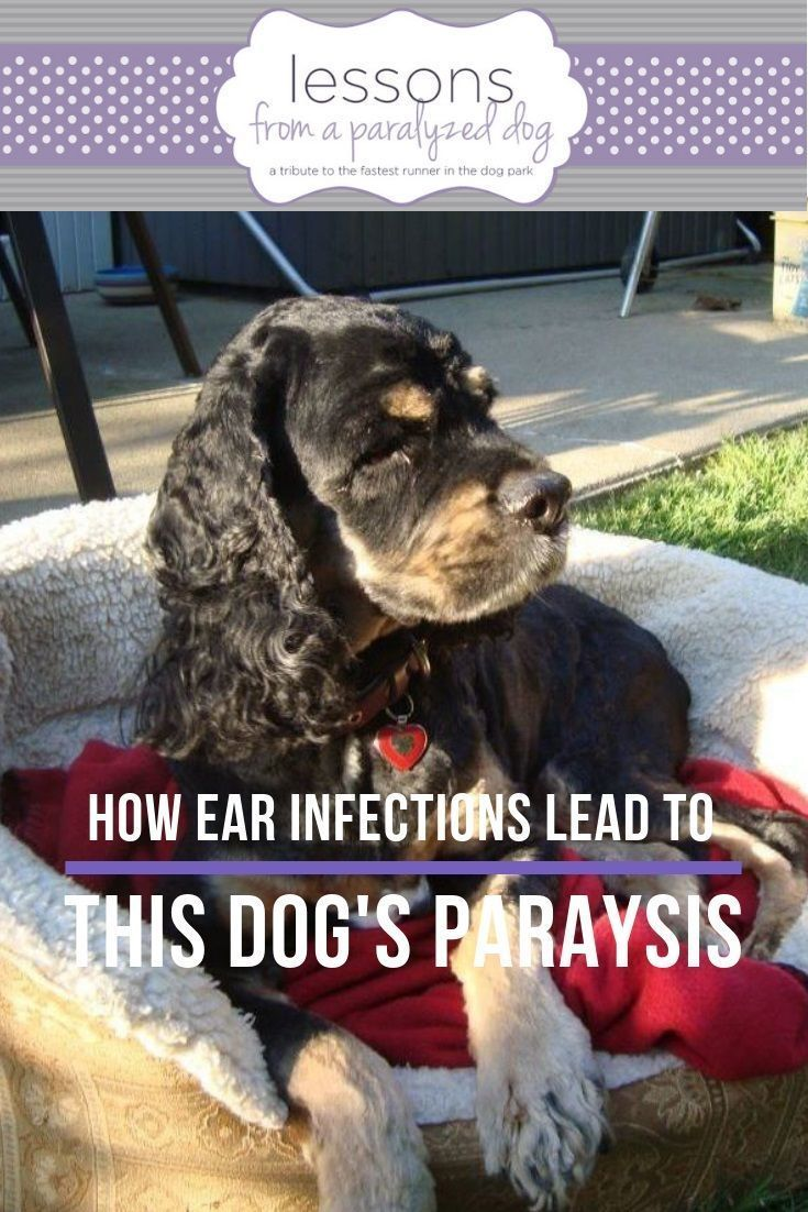 How To Get Rid Of Mats On Dogs Ears