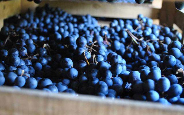 L'Amarone della Valpolicella è un vino rosso passito secco docg prodotto in Veneto.