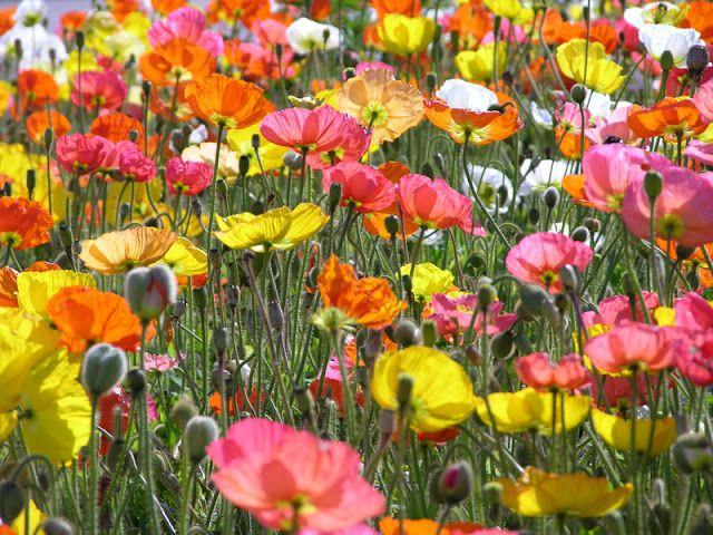 Spring-y Friday Loves
