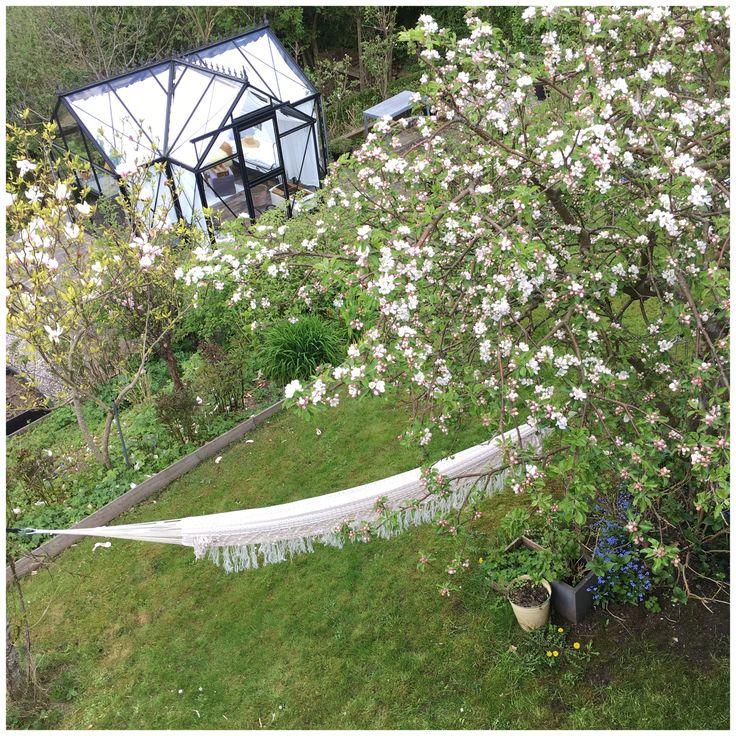 Min romantiske have vol 1 er fyldt med alle mulige dejlige og smukke roser, fine siddepladser, buske, stauder og træer. Massevis af økologiske bær og frugt.