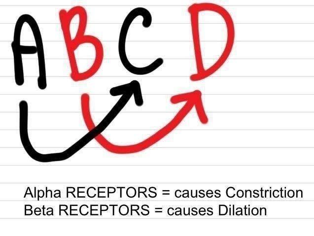 Alpha Beta Adrenergic Receptors. Nursing School.
