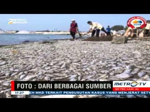Ratusan Ribu Ikan Mati, Diduga Terdapat Perangkap Arus di Perairan Ancol