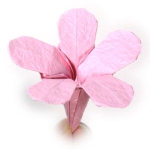 37th picture of origami phlox flower with five petals