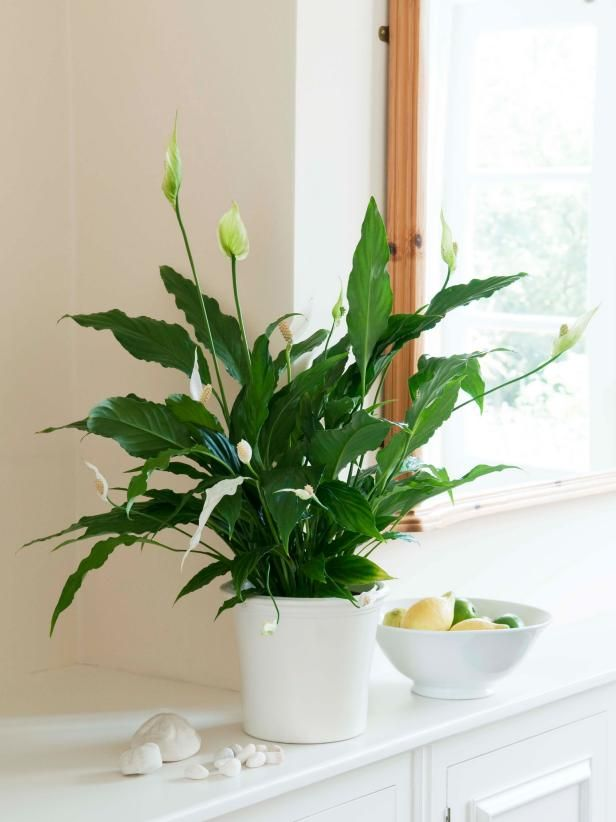 Indoor Plants For Low Light Inner Pinterest And Houseplants