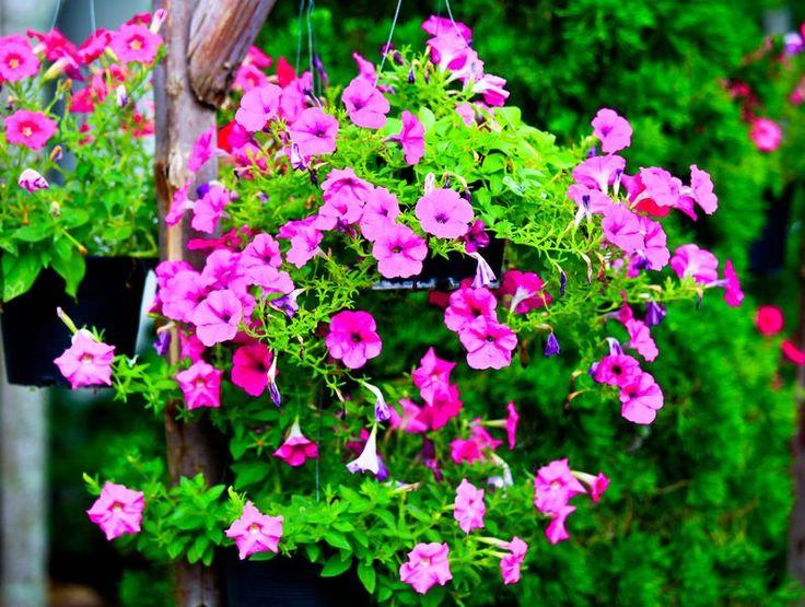 Kwietnik wiszący na balkon. #design #urządzanie #urząrzaniewnętrz #urządzaniewnętrza #inspiracja #inspiracje #dekoracja #dekoracje #dom #mieszkanie #pokój #aranżacje #aranżacja #aranżacjewnętrz #aranżacjawnętrz #aranżowanie #aranżowaniewnętrz #ozdoby #ogród #ogrody #kwiaty #kwiat #rośliny #roślina