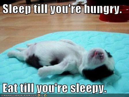 Puppy Life Philosophy: Happy Friday, Tiny Animal, Sleep Puppys, Baby Animal, Naps Time, Hard Day, Little Puppys, Funnies Friday, Funnies Puppys