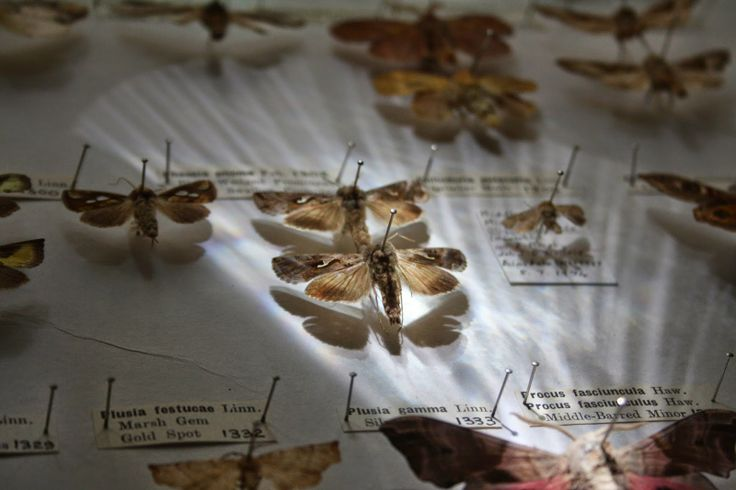 Butterfly and moth collection. Photographing natural history.