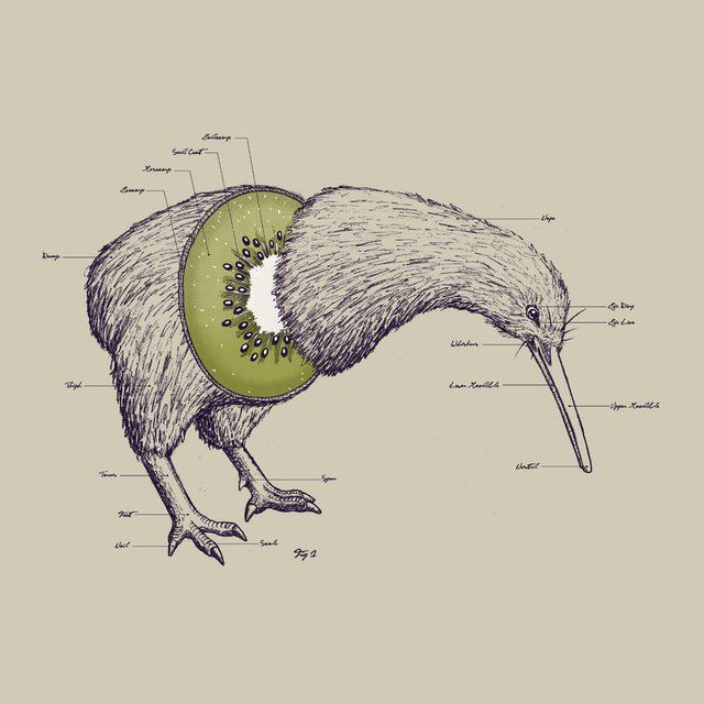 Kiwi Anatomy  by #WilliamMcDonald #illustration     I love this it makes me smile H