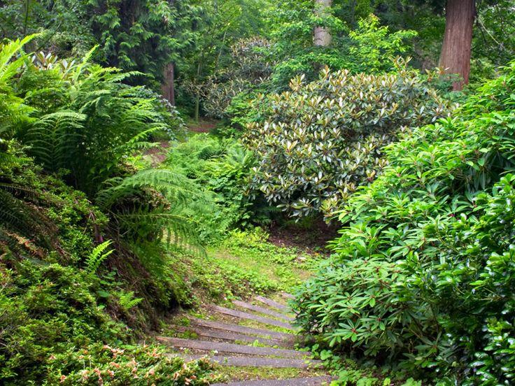 David Lam Garden At UBC