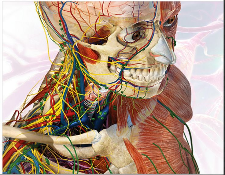 Great Websites to Teach Anatomy of Human Body in 3D ~ Educational Technology and Mobile Learning