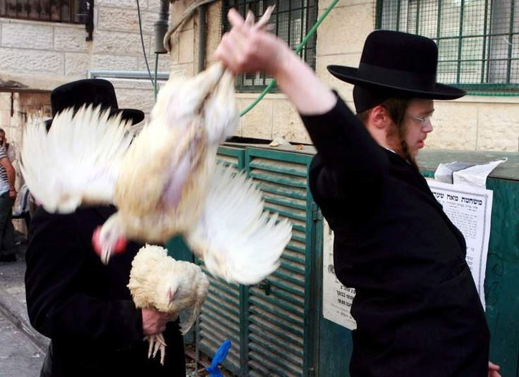 During the six days prior to the Jewish day of Yom Kippur, chickens are sacrificed and their blood spilled.