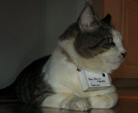 Mr. Lee's Catcam. $53