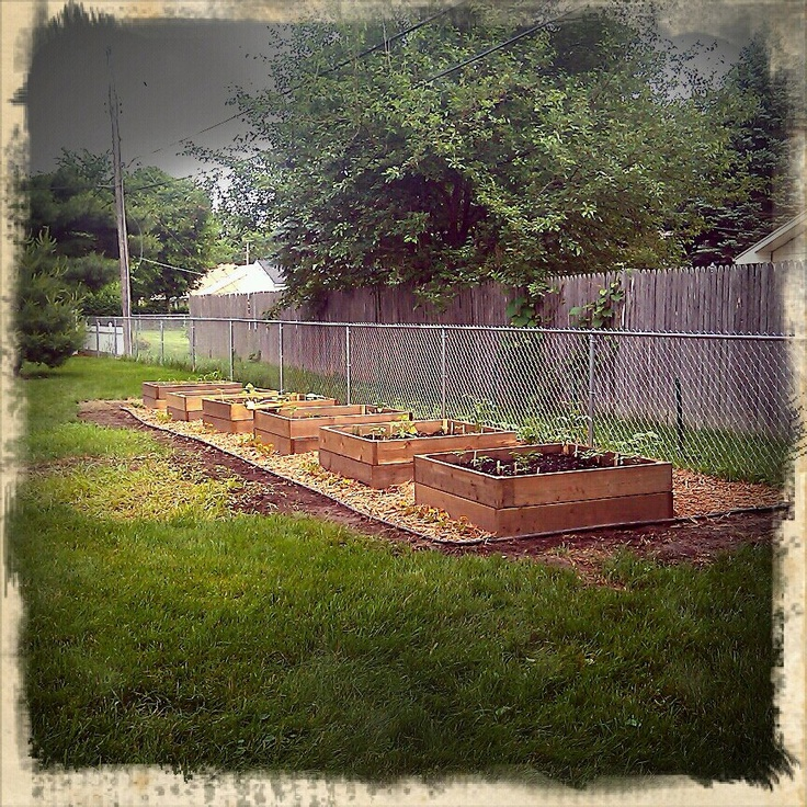My raised vegetable garden beds that my hubby built.
