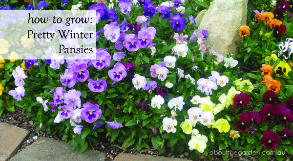 39 best images about grow now  winter gardens in australia on pinterest