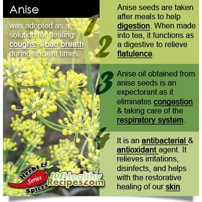 Have You Heard of Anise? - Anise was used as a solution for healing coughs & bad breath during ancient times. - Now, anise seeds are taken after meals to help digestion. When made into tea, it acts as a digestive to relieve flatulence. - Anise oil obtained from anise seeds is an expectorant as it eliminates congestion & taking care of the respiratory system. - It is an antibacterial & antioxidant agent. It relieves irritations, disinfects and helps with restorative healing of our skin.
