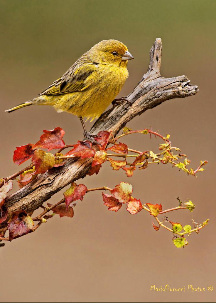 Autumn by Mario Gustavo Fiorucci on 500px