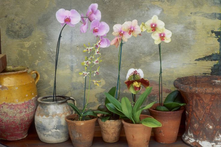 how to keep an orchid alive and blooming