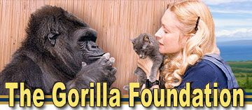 The Gorilla Foundation - Mission: To bring interspecies communication to the public, in order to save gorillas from extinction, and inspire our children to create a sustainable future for all great apes.