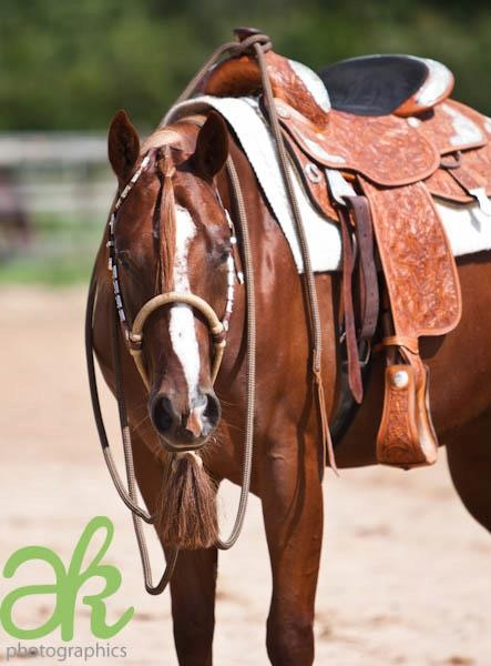 Cutting western quarter paint horse appaloosa equine tack cowboy cowgirl rodeo…