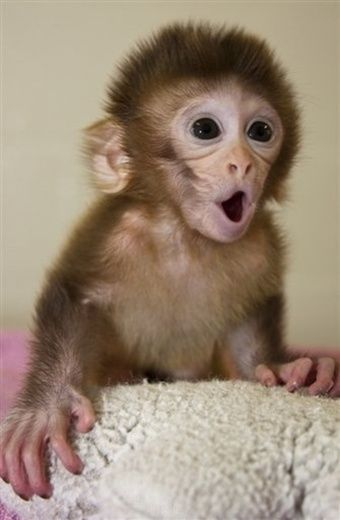 Little monkey (pet)......toilet trained of course.