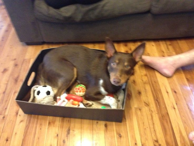 Did you say toy box ?? Or dog box
