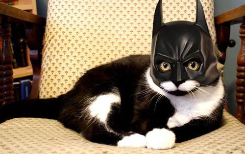 Batcat.: Cat Woman, Bats Cat, Halloween Costumes, Pet, Catwoman, Batman Cat, Funny Stuff, Funny Animal, Batman Masks