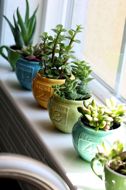 Spice containers from Anthro used as mini pots. #succulents #house plants more of these