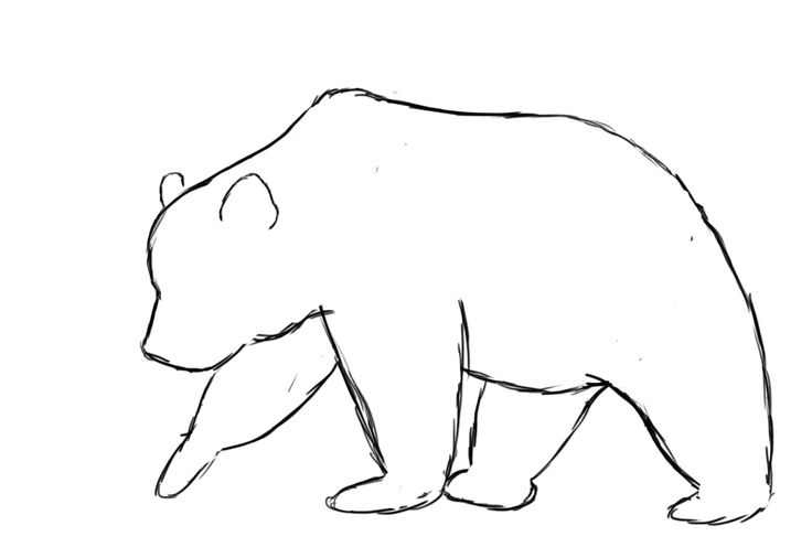 OUTline drawings of BEAR | How To Draw A Bear ~ Draw Central