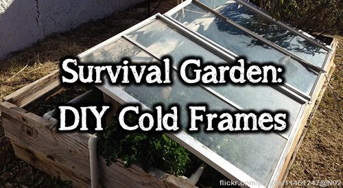 Cold frames are basically mini-greenhouses and they work by collecting natural warmth to take care of your seedlings in the spring, and to keep your organic