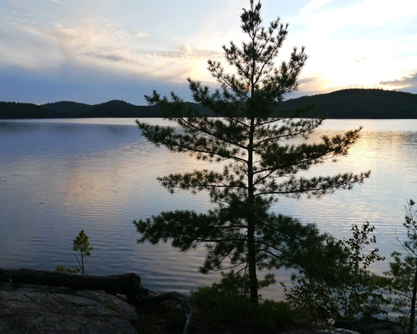 Tom Thomson's The Jack Pine, the most famous painting in Canadian art, is based on a sketch done at Grand Lake in Algonquin national park, Ontario. The site was rediscovered in 1970, though by then the original tree had died. The Jack Pine Trail leads visitors from Grand Lake's parking lot to the painting site, where a white pine now grows in more or less the same spot.