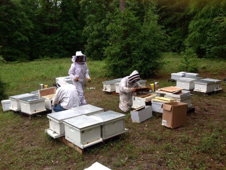 25+ unique Honey bees for sale ideas on Pinterest | Honey ... - photo#22