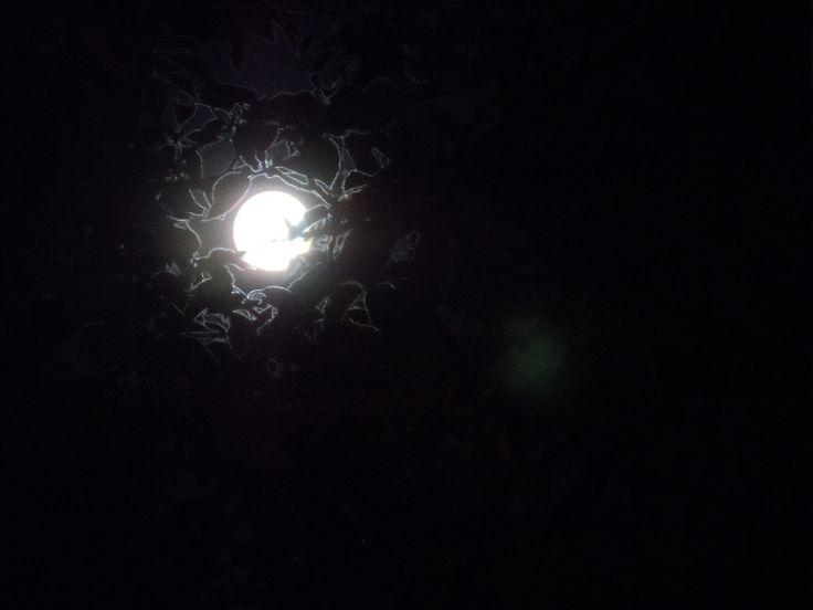 Last night's full moon seen from my doorstep.