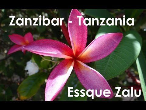 REVIEW - Essque Zalu, Zanzibar - Tanzania
