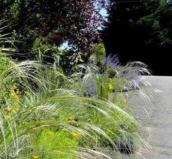 126 best images about grassen on pinterest gardens sun for Ornamental grasses that stay green all year