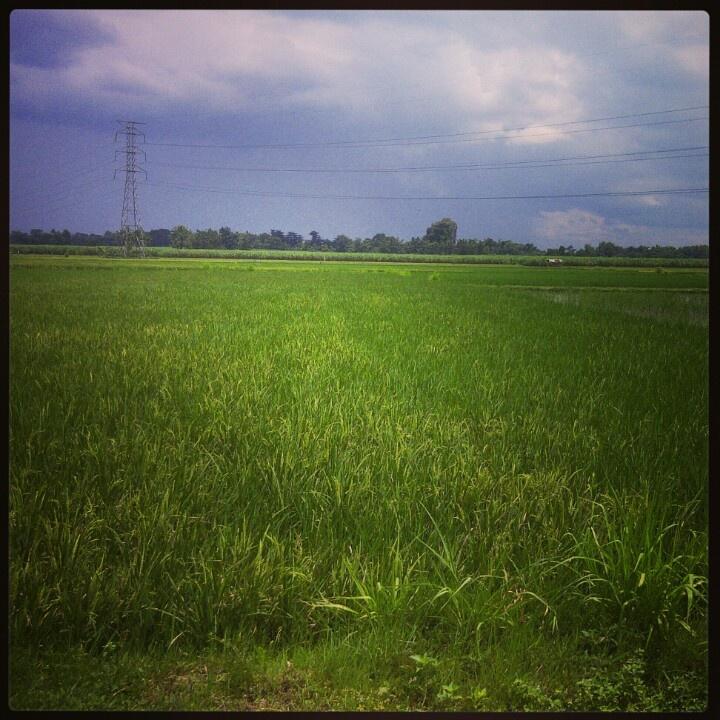 grass field...