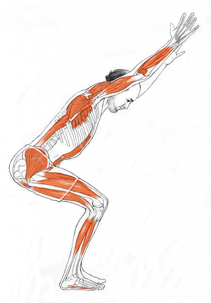 Yoga anatomy expert Leslie Kaminoff describes the action and muscle engagement that occurs during chair pose.
